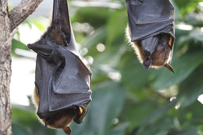 Campaña Cuidado Responsable: Murciélagos en Vicente López