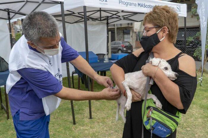 """Más de 3 mil mascotas fueron atendidas por el programa """"MAScotas MÁS felices"""" en San Isidro"""